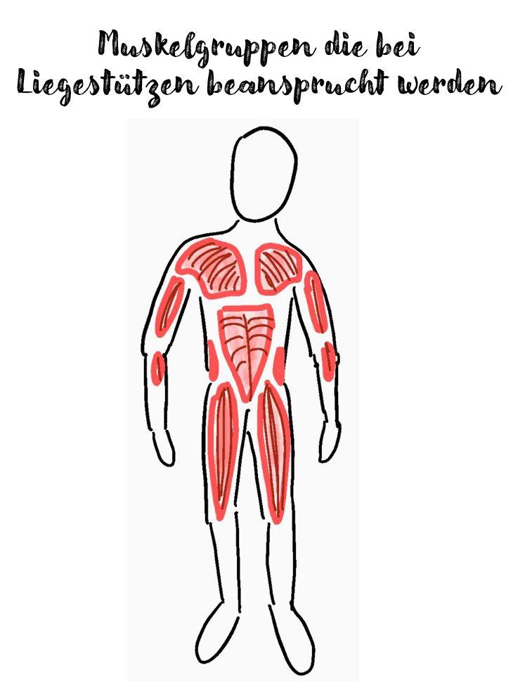 Muskelgruppen die bei Liegestützen beansprucht werden